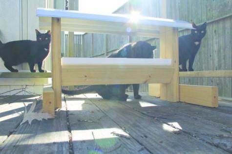 """FMU discusses campus cats: comfort or """"cat""""astrophe?"""