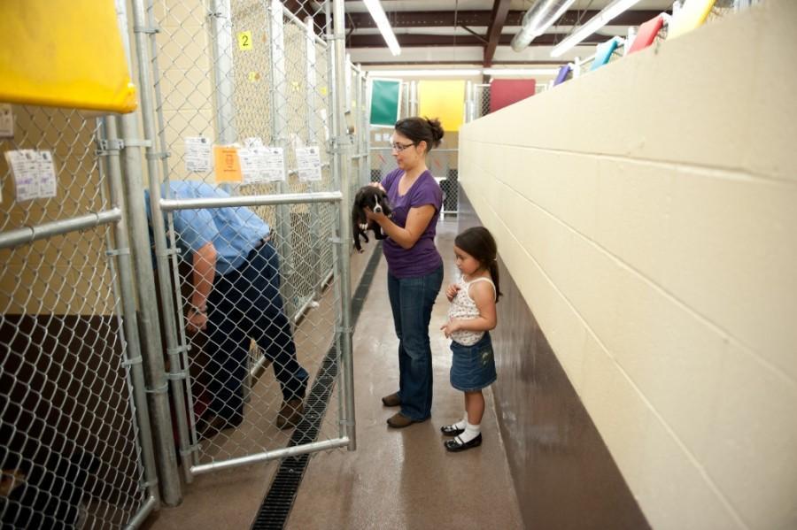 animal shelter-15