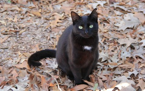 FMU manage campus cat population